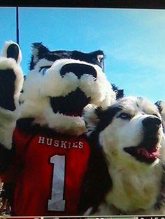 NIU Huskies!!!!!!
