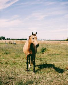 For all the people that like horsies  . . . #hawkesbayphotographer #hawkesbayphotgographers #napierphotographer #horses #horses #paddock #field #farm #animals #farmlife #ruralnz #newzealand #napier #hawkesbay #brownhorse #nikon #d750 #vsco #vscofilm #fuji400h #lookslikefilm #summer #nzsummer
