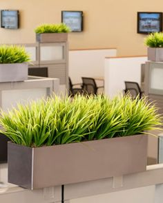 Grass Cubicle Planter  I want, but I would DIY this idea