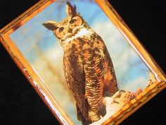 1970s Decoupage Owl Picture Great Horned Owl by bythewayside,