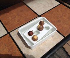 Avocado Seed Tray