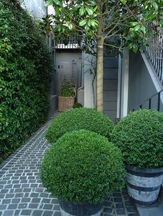 Picture result for anouska hempel garden design - LAndscaping ıdeas Boxwood Planters, Boxwood Garden, Love Garden, Dream Garden, Shade Garden, Back Gardens, Small Gardens, Outdoor Plants, Outdoor Gardens