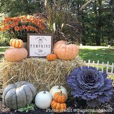 Pumpkin Display, Autumn Display, Fall Displays, Fall Wedding Decorations, Wedding Ideas, Harvest Market, Ornamental Kale, Pumpkin Picking, Fall Signs