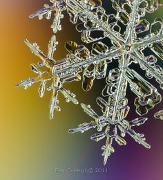 Feb 6th, 2011, Partial dark field lighting of a natural snow crystal.