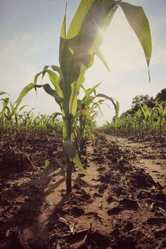 country living & farming