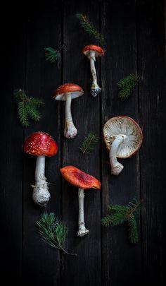 Осень - время собирать сокровища .: sweet_melis  Fly agaric. Mushrooms. Mushroom Art, Mushroom Fungi, Wild Mushrooms, Stuffed Mushrooms, Illustrator, Autumn Aesthetic, Still Life Photography, Art Inspo, Exotic