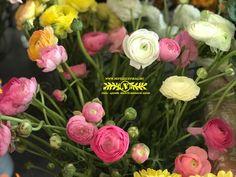 Imádunk tavasz! :) Rose, Flowers, Plants, Pink, Plant, Roses, Royal Icing Flowers, Flower, Florals