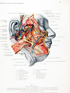 Eduard Pernkopf Atlas Of Topographical And Ap ( 1) : Free Download, Borrow, and Streaming : Internet Archive Heart Anatomy, Human Anatomy And Physiology, Human Heart, Rhinoplasty, Aesthetic Stickers, Textbook, The Borrowers, How To Draw Hands, Hand Drawings