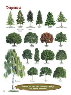 Russian Language Lessons, Russian Language Learning, Tree Leaf Identification, English Lessons For Kids, Learn Russian, Landscape Drawings, Landscapes, Preschool Learning Activities, Italian Language