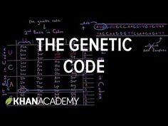 The genetic code - YouTube