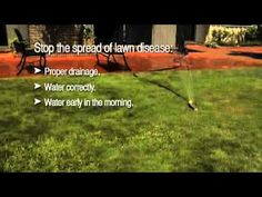 It can be hard to tell the difference between lawn diseases, dryness and pest infestations. Learn what to look for with this video.