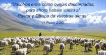 Comparta imágenes con versículos bíblicos a través de las redes sociales