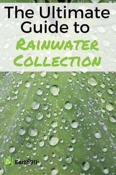 Rainwater Collection Works And How To Do It Correctly I really want to start collecting rain water. This guide is exactly what I've been looking for.I really want to start collecting rain water. This guide is exactly what I've been looking for. Water Plants, Cool Plants, Lawn Sprinklers, Water Collection, Rain Collection System, Rainwater Harvesting, Gardening Books, Water Storage, Plant Growth
