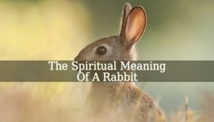 The Spiritual Meaning Of Rabbit is numerous. A rabbit also symbolizes shyness, growth, harmony and awareness. Rabbits also symbolize rebirth, creativity.