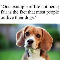 #pet #loss #quote