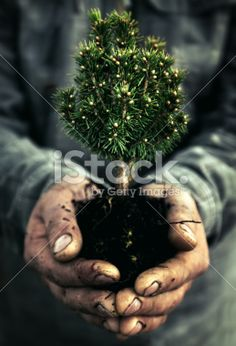 Human Hand and tree Royalty Free Stock Photo