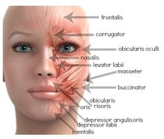 bell's palsy is a temporary condition that causes certain muscles, Cephalic Vein