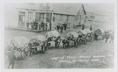 """Last Ox Train through Portage, Portage La Prairie, Man. Canadian History, American History, History Facts, Art History, Fur Trade, Virtual Museum, Canada, Le Far West, Red River"