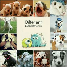 Different But Best Friends