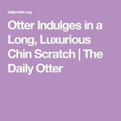 Otter Indulges in a Long, Luxurious Chin Scratch | The Daily Otter