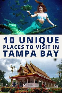 10 Unique Places to Visit in Tampa Are you looking for a unique list of things to do in Tampa? Here are some of my favorite and unique places to visit in Tampa. Tampa Florida, Clearwater Florida, Visit Florida, Florida Vacation, Florida Travel, Vacation Places, Florida Beaches, Vacation Destinations, Vacation Spots