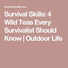 Survival Skills: 4 Wild Teas Every Survivalist Should Know | Outdoor Life