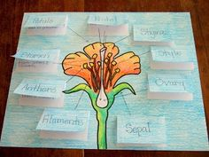 5th grade flower parts | The Inspired Classroom: Flower Parts And Their ... | 5th Grade-Science