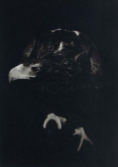 The Threshold #2 (2011) by Ashleigh Garwood via Brenda May Gallery, Sydney