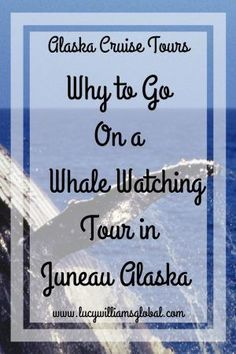 Why to Go on a Whale Watching Tour in Juneau Alaska - Lucy Williams Global Cruise Excursions, Cruise Travel, Travel Usa, Travel Tips, Travel Ideas, Travel Hacks, Travel Advice, Shore Excursions, Canada Travel
