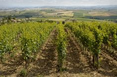 The farm 'Pietroso' started in Montalcino in the 1970s thanks to the passion of winemaker Domenico Berni. His aim was to produce a limited quantity of fine wines such as Brunello and Rosso di...