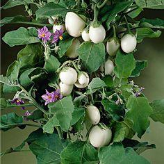"""Pestební sada """"Lilek""""   Magnet 3Pagen #magnet3pagen #magnet3pagen_cz #magnet3pagencz #3pagen #flowers #dekoration"""