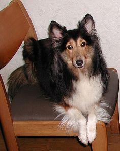 """""""Amethyst"""" my dear dog 1995-2004"""