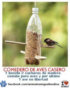 *+..bird feeding!! (ahora las aves del vecindario estaran FELICES!!)..*+