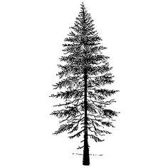 fir_tree 2