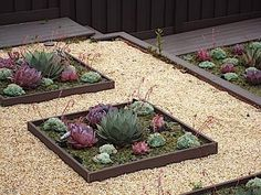 great way to highlight succulent flowerbed