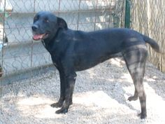 FLEUR née en 2008 Garderie animalière beaucairoise(Gard)