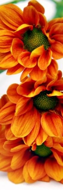 planting the garden that is your life...plant orange. the color of happy.