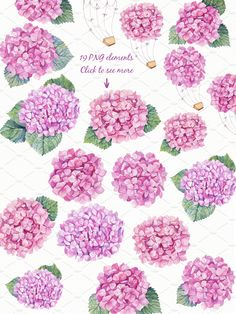 Watercolor Pink Hydrangea by Sunny Illustrations on @creativemarket