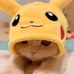 Baby Animals Super Cute, Cute Baby Cats, Cute Little Animals, Cute Cats And Kittens, Kittens Cutest, Cute Dogs, Cute Cat Memes, Cute Animal Memes, Cute Love Memes