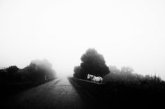 Road by Rui Caria on 500px