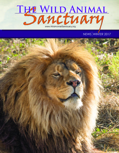 Our Winter 2017 Newsletter is Here! #WildAnimalSanctuary #WinterNewsletter17 #PictureOfTheDay
