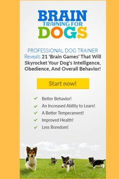 Dog Commands Training, Basic Dog Training, Brain Training, Training Dogs, Dog Boredom, Boredom Busters, Brain Busters, Agressive Dog Training, Brain Games For Dogs