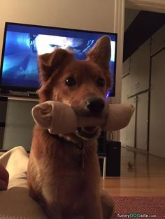 Funny Dog Pictures Videos | Funny Happy Dog Pictures | Funny Hunting Dog Pictures