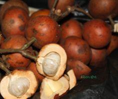 beberapa buah yang ada di banua kalimantan selatan>buah kapul