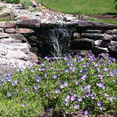 Flowers and waterfalls. Backyard haven.