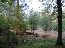 Epping Forest - Wikipedia, the free encyclopedia