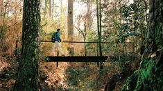 East Texas Hikes That Will Take You to Another World – Texas Monthly Texas Hiking Trails, Camping In Texas, Texas Roadtrip, Hiking Spots, Texas Travel, Family Camping, Winter Hiking, Winter Camping, Winter Travel