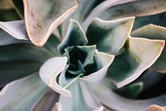 Understanding how often to water succulents is a critical part of growing a healthy succulent if watering is done incorrectly it may kill the plant. Watering Succulents, How To Water Succulents, Planting Succulents, Beginning Of Spring, Garden Soil, Photosynthesis, Potting Soil, Winter Garden, Irrigation