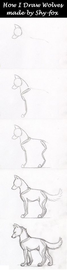 "sketches step by step well yeah this is how I draw my wolves (and all other animals) I first draw their ""skeleton"" and next start giving the wolf some meat around his skeleton a real wolf skeleton > hope this is usef. Pencil Art Drawings, Art Drawings Sketches, Easy Drawings, Animal Sketches, Animal Drawings, Drawing Animals, Wolf Drawings, Drawing Techniques, Drawing Tips"