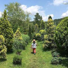 【mamari_official】さんのInstagramをピンしています。 《* * 森を探検 #フリードで夢旅 * * 娘と訪れた 緑豊かな森林 * また行きたいなぁ♡ * 森の中にいると 少し気持ちがリラックスする気がしますよね♪ * * @higusaku_mamamade  さん、ありがとうございました * * * #フリードで夢旅 キャンペーン開催中!#ママリ * * 【応募方法】 * 1. インスタグラムで「ママリ」の公式アカウントをフォロー♪ * 2. 投稿したい写真に @mamari_official をタグ付け * 3. 投稿文に #フリードで夢旅 と #ママリ の2つのハッシュタグを付ける * 4.Honda 「フリード」があったら、行ってみたい場所を書たり写真を載せたりして投稿 (昔の写真でもOK♪) * * 【期間】 * 2016年9月16日(金)~2016年10月7日(金)23:59 * * 【特典】 * 1.コンテスト終了後、抽選で1名様の「夢旅」(40万円相当)をHondaとママリが実現します。…